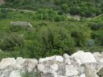 Вид на ущелье с севера Монфорта